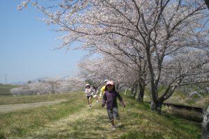 桜の季節は恒例のおさんぽ